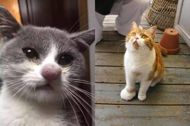site rencontre animaux chat)